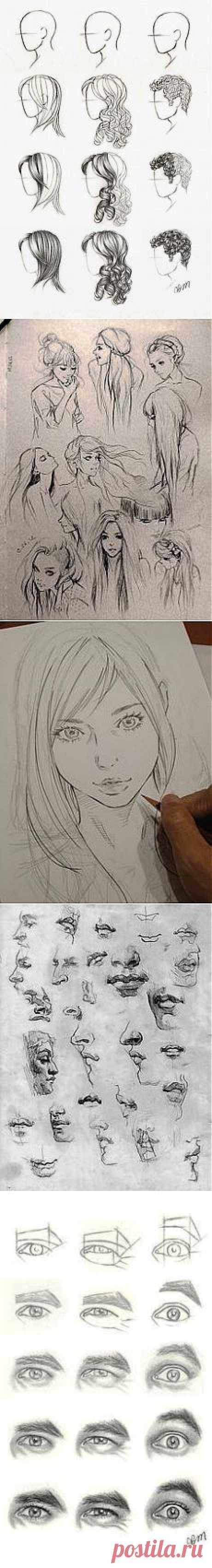 Olga Dybova приколол(а) это к доске учимся рисовать