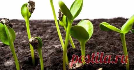 Сайт Дачное царство   Условия для роста растений