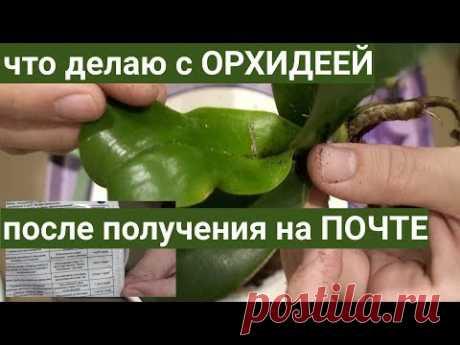 ОРХИДЕИ после ПОЧТЫ - СТРЕСС, ЭПИН, пересадка