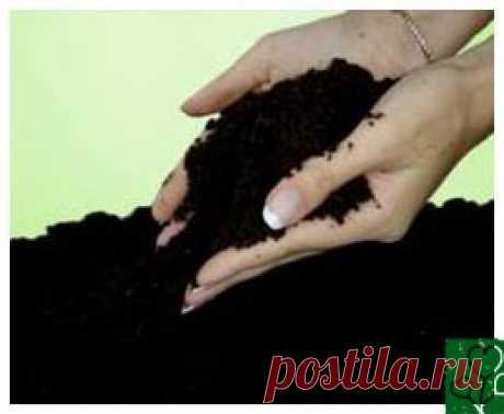 О вреде навоза и перегноя, которыми растения питаются через силу В органическом земледелии минеральные удобрения не применяются, а для питания растений используем органику. Казалось бы, все просто: привезли на участок достаточное количество перегноя – и все будет замечательно. не надо заниматься производством биогумуса с помощью калифорнийских червей,...