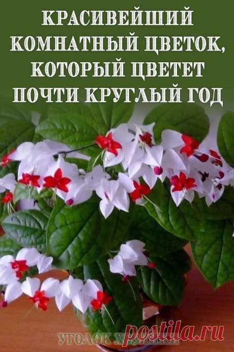 Для всех любителей цветущих домашних растений