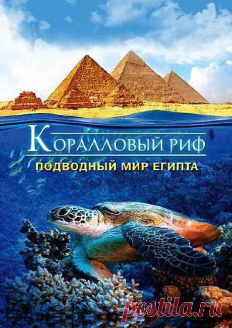 """Фильм """"Коралловый риф : Подводный мир Египта (видео)"""" (""""Abenteuer Korallenriff"""") - смотреть легально и бесплатно онлайн на MEGOGO.NET"""