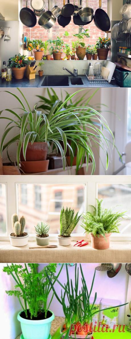 Какие комнатные растения подходят для кухни?