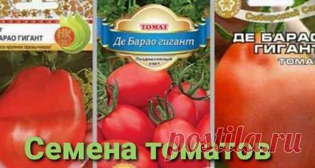 "На сколько хороши помидоры сорта ""Де барао"". | ОГОРОДЫ БЕЗ ГРАНИЦ | Яндекс Дзен"