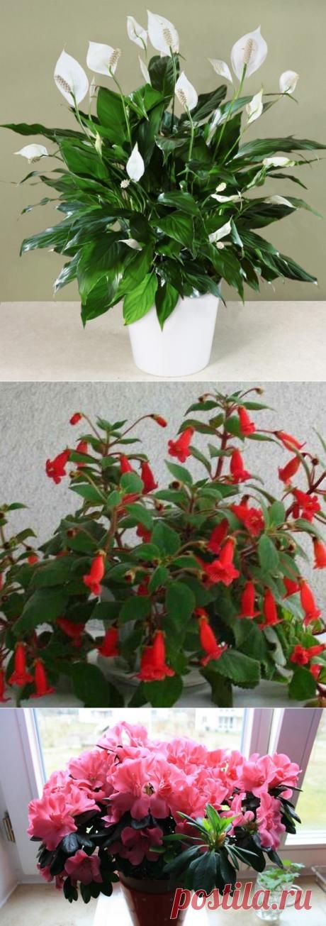Секрет роскошного комнатного цветника | Вкусно приготовим