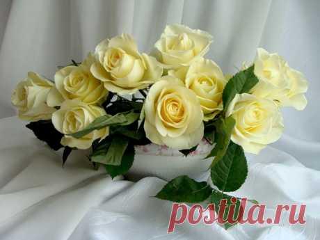 Букет роз Фото|Галерея фотографий