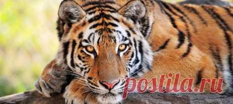 Гороскоп на 2020 год для Тигра: мужчины и женщины