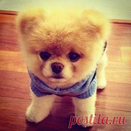 Плюшевый пес