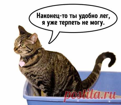 Подробно о странных привычках кошек!!!
