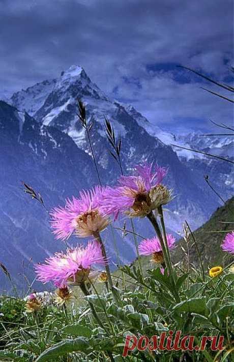 Освободи пространство для весны! Открой окно – впусти весёлый ветер. Растают в первом мартовском рассвете Последние заснеженные сны.  Освободи пространство для мечты, Дай ей расправить радужные крылья. И душу отряхни от снежной пыли, И веру в чудо снова обрети!  Освободи пространство для любви, Не заставляй её стоять у двери. Поверь в себя - и мир в тебя поверит! Счастливым будь и радостью живи!  (Евгения Шарова)