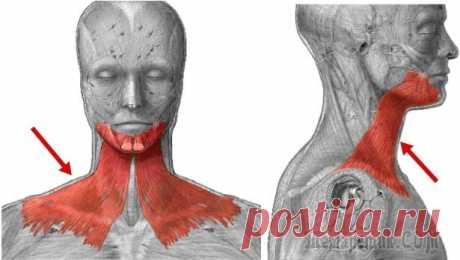 Подкожная мышца шеи: секрет молодой и здоровой шеи