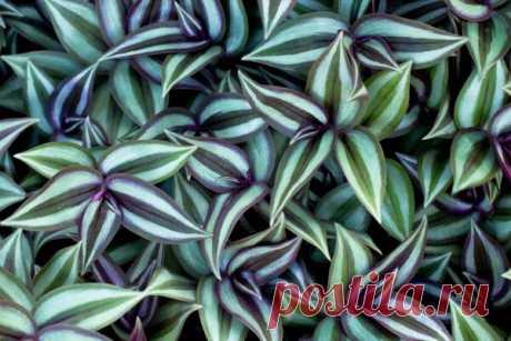 Растение оберег | ЗЕЛЕНЫЙ МИР С ЕЛЕНОЙ | Яндекс Дзен