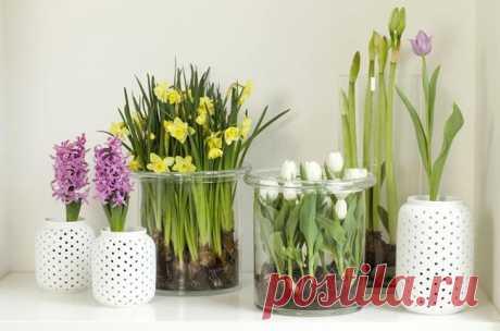 19 цветов и овощей, которые можно вырастить в вазе с водой Комнатные растения делают наши жилища уютными и всегда радуют глаз. Однако не у каждого домовладельца хватит терпения возиться с землей, ухаживая за зелеными «декорациями».Существуют растения, легко о...
