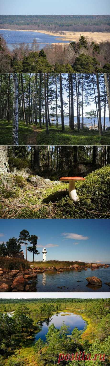 Лахемаа национальный парк Эстония фото