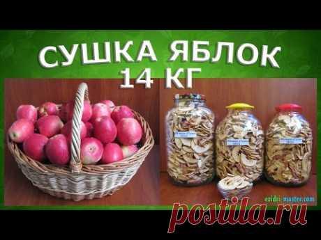 Как высушить яблоки в сушилке для фруктов? Нарезка и очистка 14 кг яблок за 20 минут.