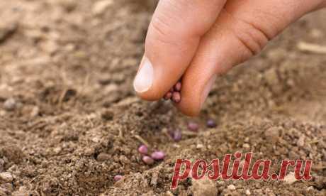 Посев овощей под зиму: заказ семян в интернет-магазине Seedspost