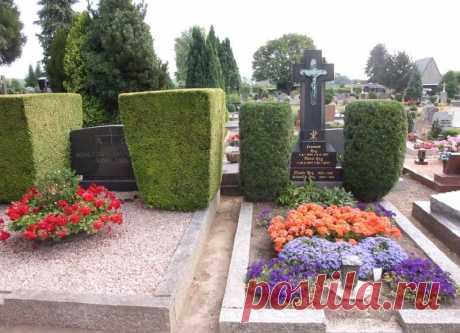 Какой кустарник посадить на кладбище: обзор с фото и описаниями Какие кустарники подходят для украшения могилы. Обзор неприхотливых растений для кладбища.