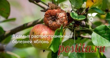 8 самых распространенных болезней яблонь Рассмотрим самые опасные и часто встречающиеся белезни яблонь: несколько видов рака, монилиоз, паршу, цитоспороз, аскохитозную и бурую пятнистости, хлороз.