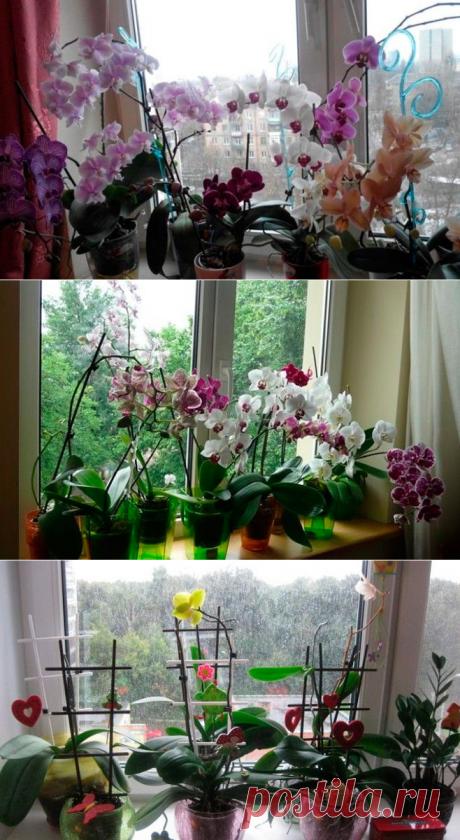 Девушки, никогда не держите орхидею дома! На работе — можно, а дома — нет!