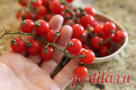 Мини-овощи на огороде и подоконнике — стоит ли их выращивать?. Фото — Ботаничка.ru