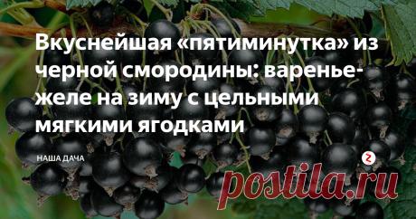 Вкуснейшая «пятиминутка» из черной смородины: варенье-желе на зиму с цельными мягкими ягодками Черная смородина – фаворит на участках россиян, в настоящее время насчитывается несколько десятков сортов. Но, конечно же, все мы хотим иметь на столах крупные сладкие ягоды, которые и собирать-то – одно удовольствие. Из таких ягод получается самое вкусное варенье – пятиминутка. Если вы все сделаете правильно, то получится вкуснейшее желе, в котором будут плавать цельные мягкие ягодки.