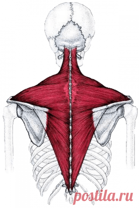 One exercise which will help you to remove stress from a neck