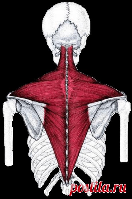 Одно упражнение, которое поможет вам снять напряжение с шеи