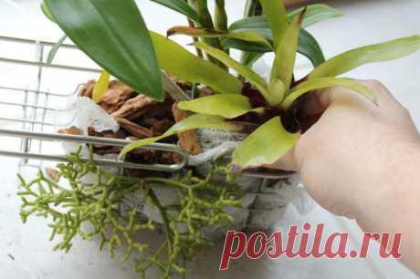 Лучший витаминный коктейль для орхидей – прекрасный метод реанимации цветов - Ok'ейно.plus