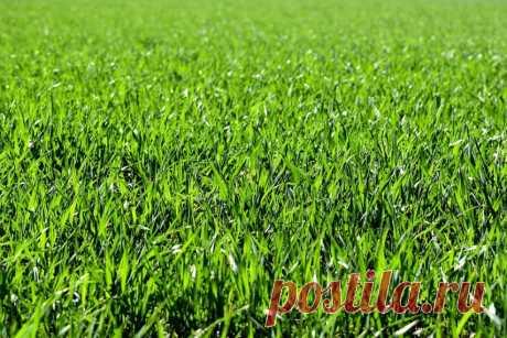 Скошенная трава и особенности ее применения на своем участке с пользой методом мульчирования, приготовления удобрения