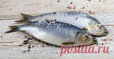 Как засолить селедку. А какая получается вкуснятина… Больше никогда не покупаю магазинную соленую селедку! Скажу вам более… этот рецепт великолепно подходит для засолки скумбрии и любой красной рыбы.