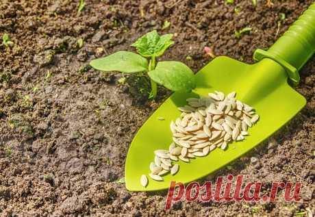 Как вырастить самые вкусные огурцы