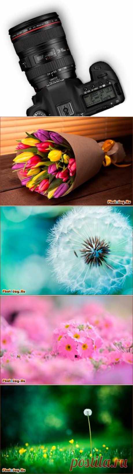 Как фотографировать цветы? - Фотосайт. Уроки фотографии. Статьи о фотографии.