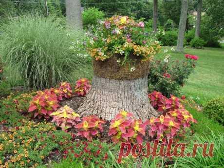 Los parterres de los tocones y los troncos – adornamiento no trivial de su jardín