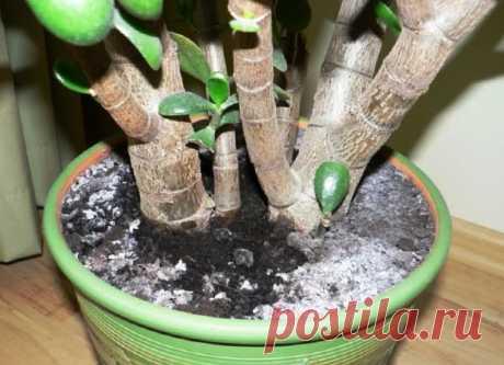 Убираем Белый налет на почве в цветочных горшках элементарным способом Часто в горшках, даже при том, что я фильтрую и отстаиваю воду, на поверхности почвы, появляется белый известковый налет. Это полбеды, но здесь еще и появляется плесень, что все вместе, перекрывает доступ кислорода в почву к корням. Растение не получает достаточно кислорода и начинает чахнуть, сбрасывать листья и бутоны. Чтобы избавиться от этой проблемы, не […]