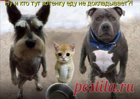 Фото– Google+