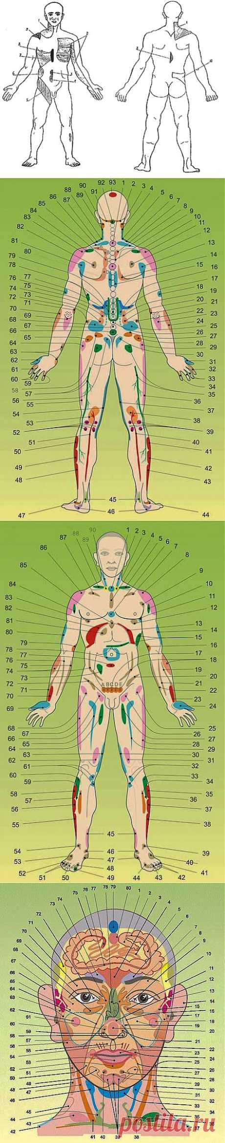 Диагностические проекционные зоны внутренних органов