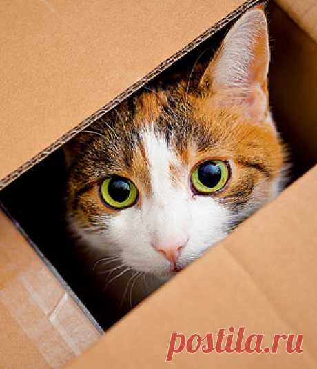Why cats so love boxes? | Question-answer | Round the world