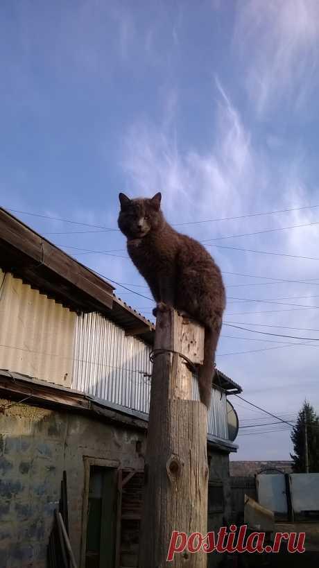 Кот прилетел...