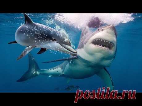 Вот Почему Акулы Боятся Дельфинов... - YouTube