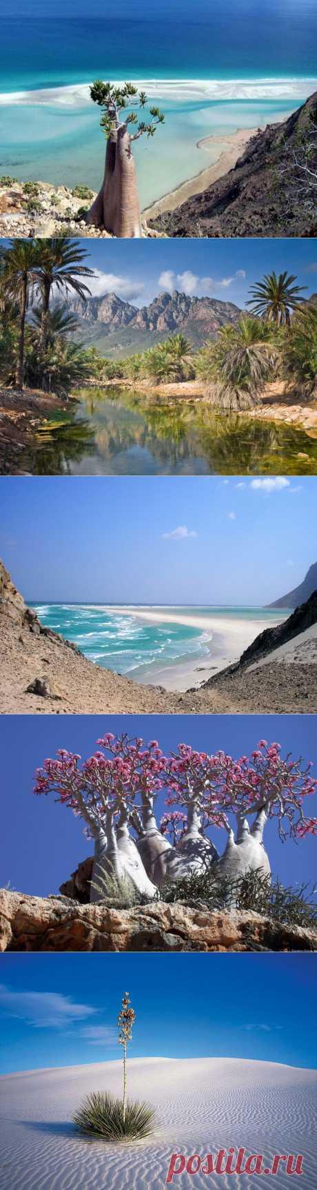 Необычные пейзажи острова Сокотра | Удивительное и смешное в картинках