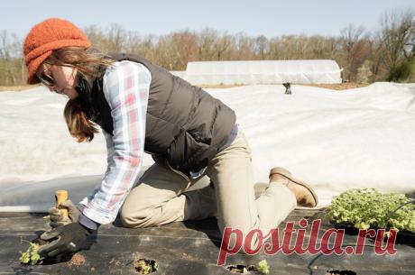 5 вещей, которые вы делаете в огороде зря | Советы по дому