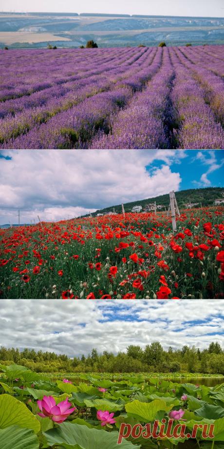 PeritoBurrito   Куда ехать, чтобы увидеть цветение лаванды, маков и ...