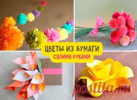 Цветы из бумаги своими руками: схемы и шаблоны Как сделать цветок из бумаги своими руками? Шаблоны и схемы цветов для вырезания из бумаги. Пошаговые мастер-классы с фото