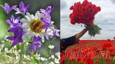 В тебе цветёт то, что ты поливаешь.  Эльчин Сафарли  Нежность,любовь,жизнь,красота,гармония. Пусть цветет Красота Природы!! ... Всё надо беречь ... пока ОНО ЕСТЬ ! . Как прекрасен этот мир... Хочется пройтись там и подышать...Нужно жить!!! У доброго человека преумножается красота,у злого-уродство.