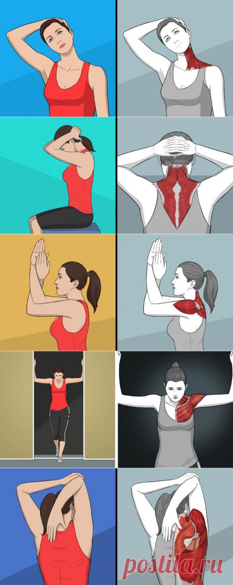 Упражнения на растяжку, которые заменят массаж шеи и спины. - My izumrud