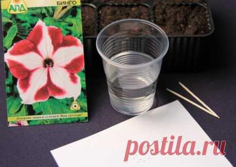 Как вырастить рассаду петунии из семян в домашних условиях | Рассада (Огород.ru)