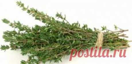 Эта трава может вылечить более полусотни разнообразных недугов | Обалденно