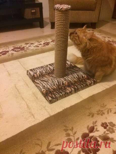Когтеточка для кошек | Мой дом