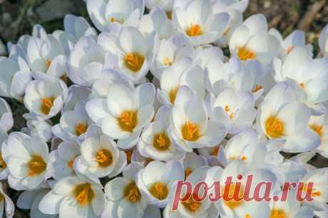 Первоцветы уже наполняют воздух чудесными ароматами