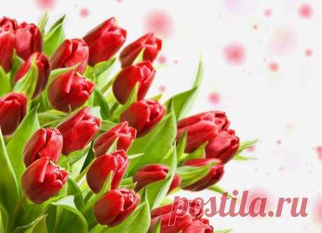 Обои на рабочий стол Цветы:Листики, Букет, Тюльпаны, Бутоны - скачать бесплатно.   Обои-на-стол.com